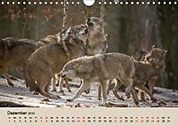 Wolfsrudel (Wandkalender 2019 DIN A4 quer) - Produktdetailbild 12