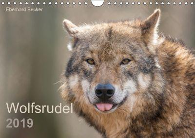 Wolfsrudel (Wandkalender 2019 DIN A4 quer), Eberhard Becker