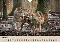 Wolfsrudel (Wandkalender 2019 DIN A4 quer) - Produktdetailbild 3