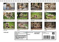 Wolfsrudel (Wandkalender 2019 DIN A4 quer) - Produktdetailbild 13