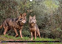 Wolves, Wild Spirits (Wall Calendar 2019 DIN A3 Landscape) - Produktdetailbild 9