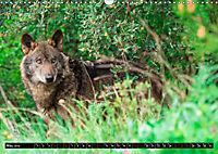 Wolves, Wild Spirits (Wall Calendar 2019 DIN A3 Landscape) - Produktdetailbild 5