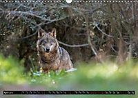 Wolves, Wild Spirits (Wall Calendar 2019 DIN A3 Landscape) - Produktdetailbild 4