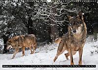 Wolves, Wild Spirits (Wall Calendar 2019 DIN A3 Landscape) - Produktdetailbild 1