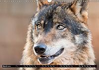 Wolves, Wild Spirits (Wall Calendar 2019 DIN A3 Landscape) - Produktdetailbild 3