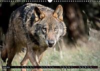 Wolves, Wild Spirits (Wall Calendar 2019 DIN A3 Landscape) - Produktdetailbild 6