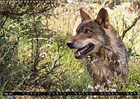 Wolves, Wild Spirits (Wall Calendar 2019 DIN A3 Landscape) - Produktdetailbild 7