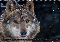 Wolves, Wild Spirits (Wall Calendar 2019 DIN A3 Landscape) - Produktdetailbild 12