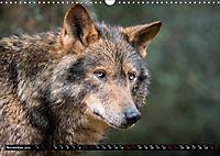 Wolves, Wild Spirits (Wall Calendar 2019 DIN A3 Landscape) - Produktdetailbild 11