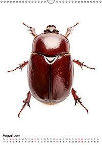 Wonderful Beetles (Wall Calendar 2019 DIN A3 Portrait) - Produktdetailbild 8