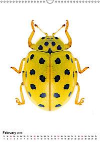 Wonderful Beetles (Wall Calendar 2019 DIN A3 Portrait) - Produktdetailbild 2