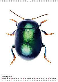 Wonderful Beetles (Wall Calendar 2019 DIN A3 Portrait) - Produktdetailbild 1