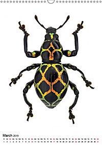 Wonderful Beetles (Wall Calendar 2019 DIN A3 Portrait) - Produktdetailbild 3