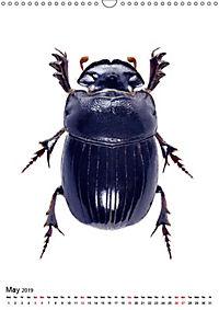 Wonderful Beetles (Wall Calendar 2019 DIN A3 Portrait) - Produktdetailbild 5