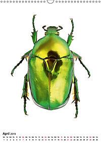 Wonderful Beetles (Wall Calendar 2019 DIN A3 Portrait) - Produktdetailbild 4