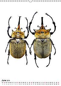 Wonderful Beetles (Wall Calendar 2019 DIN A3 Portrait) - Produktdetailbild 6