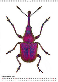 Wonderful Beetles (Wall Calendar 2019 DIN A3 Portrait) - Produktdetailbild 9