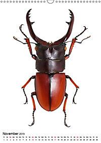 Wonderful Beetles (Wall Calendar 2019 DIN A3 Portrait) - Produktdetailbild 11