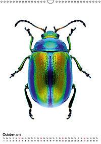 Wonderful Beetles (Wall Calendar 2019 DIN A3 Portrait) - Produktdetailbild 10