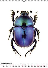 Wonderful Beetles (Wall Calendar 2019 DIN A3 Portrait) - Produktdetailbild 12