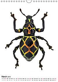 Wonderful Beetles (Wall Calendar 2019 DIN A4 Portrait) - Produktdetailbild 3