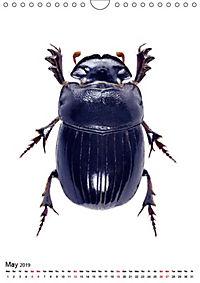 Wonderful Beetles (Wall Calendar 2019 DIN A4 Portrait) - Produktdetailbild 5