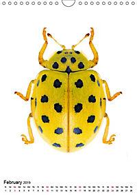Wonderful Beetles (Wall Calendar 2019 DIN A4 Portrait) - Produktdetailbild 2