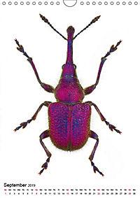 Wonderful Beetles (Wall Calendar 2019 DIN A4 Portrait) - Produktdetailbild 9