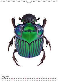 Wonderful Beetles (Wall Calendar 2019 DIN A4 Portrait) - Produktdetailbild 7