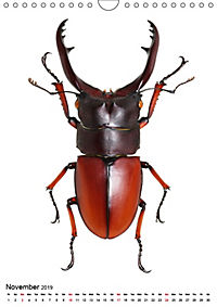 Wonderful Beetles (Wall Calendar 2019 DIN A4 Portrait) - Produktdetailbild 11