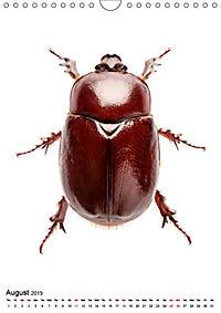 Wonderful Beetles (Wall Calendar 2019 DIN A4 Portrait) - Produktdetailbild 8