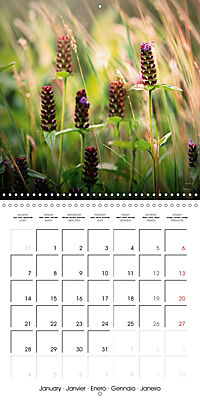 Wonderful Wildflowers (Wall Calendar 2019 300 × 300 mm Square) - Produktdetailbild 1