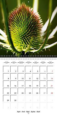 Wonderful Wildflowers (Wall Calendar 2019 300 × 300 mm Square) - Produktdetailbild 4