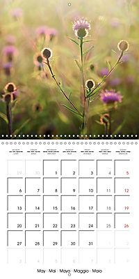 Wonderful Wildflowers (Wall Calendar 2019 300 × 300 mm Square) - Produktdetailbild 5