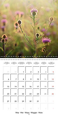 Wonderful Wildflowers (Wall Calendar 2019 300 × 300 mm Square) - Produktdetailbild 5