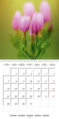 Wonderful Wildflowers (Wall Calendar 2019 300 × 300 mm Square) - Produktdetailbild 10