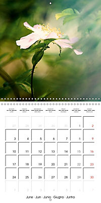 Wonderful Wildflowers (Wall Calendar 2019 300 × 300 mm Square) - Produktdetailbild 6