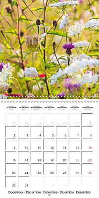 Wonderful Wildflowers (Wall Calendar 2019 300 × 300 mm Square) - Produktdetailbild 12