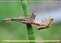 Wunder der Evolution Libellen (Tischkalender 2019 DIN A5 quer) - Produktdetailbild 3