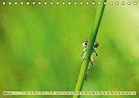 Wunder der Evolution Libellen (Tischkalender 2019 DIN A5 quer) - Produktdetailbild 5