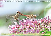 Wunder der Evolution Libellen (Tischkalender 2019 DIN A5 quer) - Produktdetailbild 1