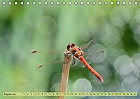 Wunder der Evolution Libellen (Tischkalender 2019 DIN A5 quer) - Produktdetailbild 8