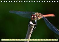 Wunder der Evolution Libellen (Tischkalender 2019 DIN A5 quer) - Produktdetailbild 10