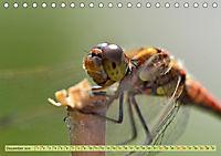 Wunder der Evolution Libellen (Tischkalender 2019 DIN A5 quer) - Produktdetailbild 12