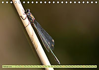 Wunder der Evolution Libellen (Tischkalender 2019 DIN A5 quer) - Produktdetailbild 2