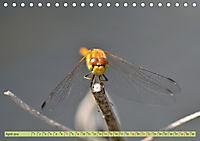 Wunder der Evolution Libellen (Tischkalender 2019 DIN A5 quer) - Produktdetailbild 4