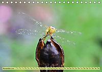 Wunder der Evolution Libellen (Tischkalender 2019 DIN A5 quer) - Produktdetailbild 11