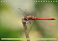 Wunder der Evolution Libellen (Tischkalender 2019 DIN A5 quer) - Produktdetailbild 9
