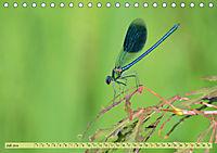 Wunder der Evolution Libellen (Tischkalender 2019 DIN A5 quer) - Produktdetailbild 7
