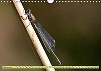 Wunder der Evolution Libellen (Wandkalender 2019 DIN A4 quer) - Produktdetailbild 2